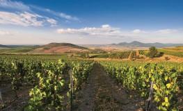 vinica - foto firmy  R